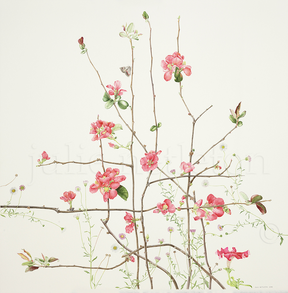 Chaenomeles-japonica-Flowering-Quince